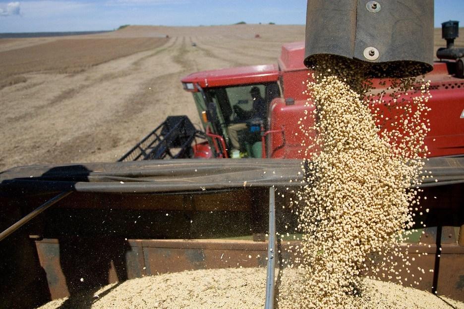 APP ajuda a proteger lavouras de soja contra doenças