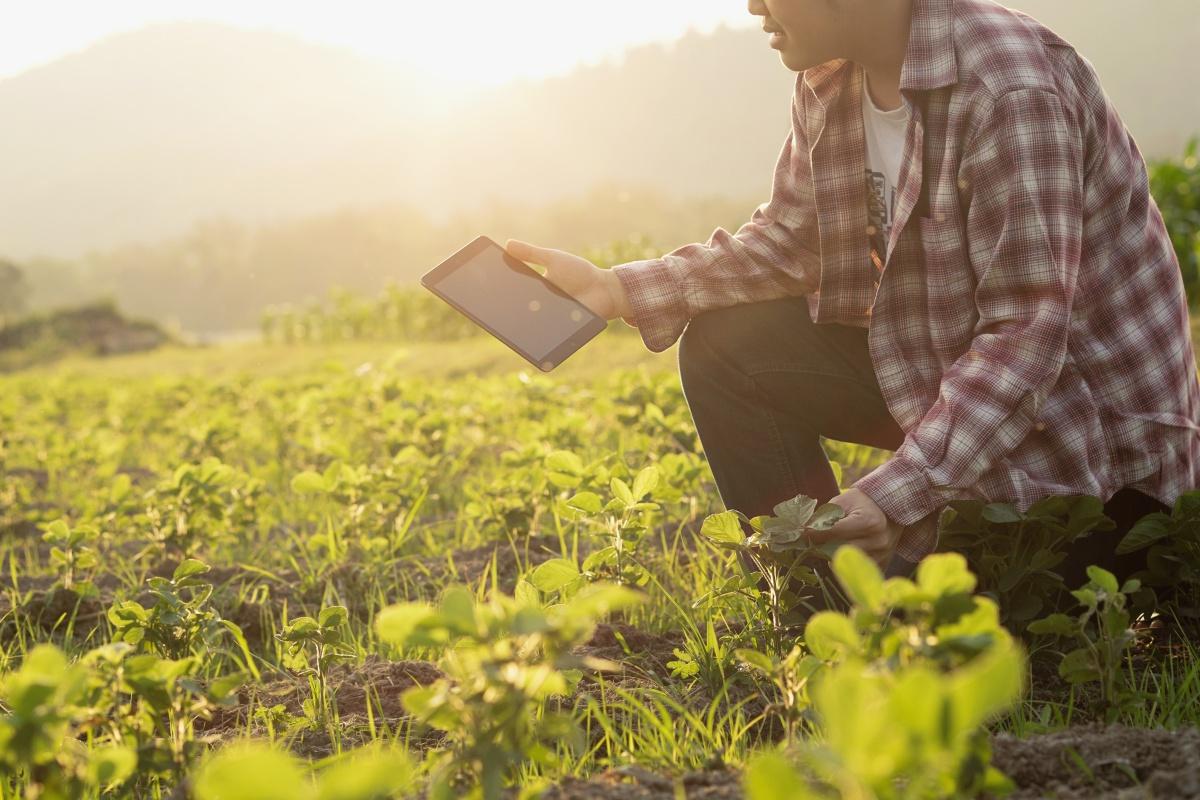 Como a gestão agrícola pode agregar valor ao seu negócio?